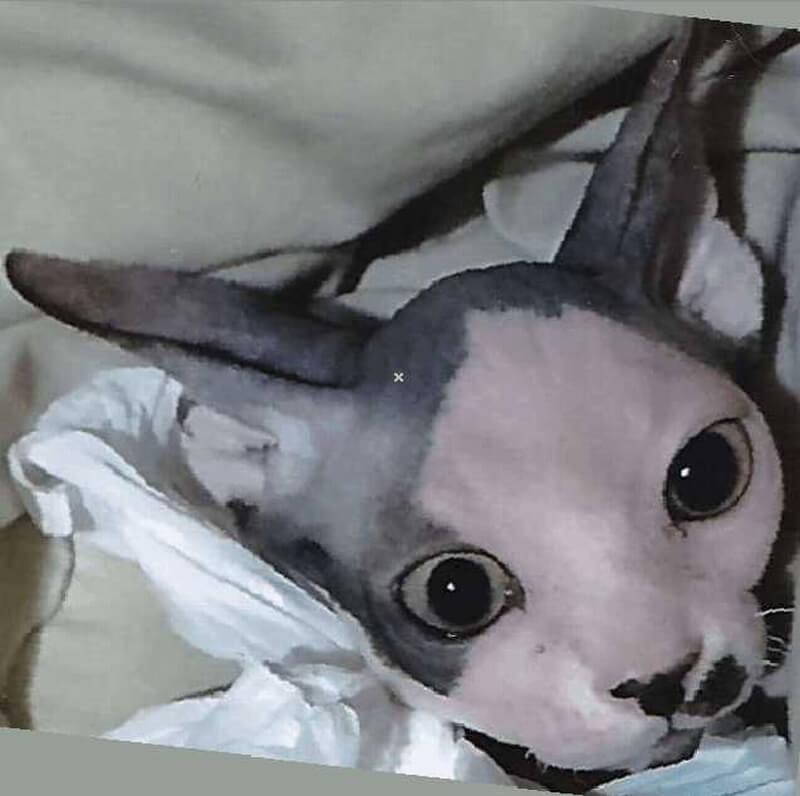 2018gallery-吉祥寺猫祭り-78
